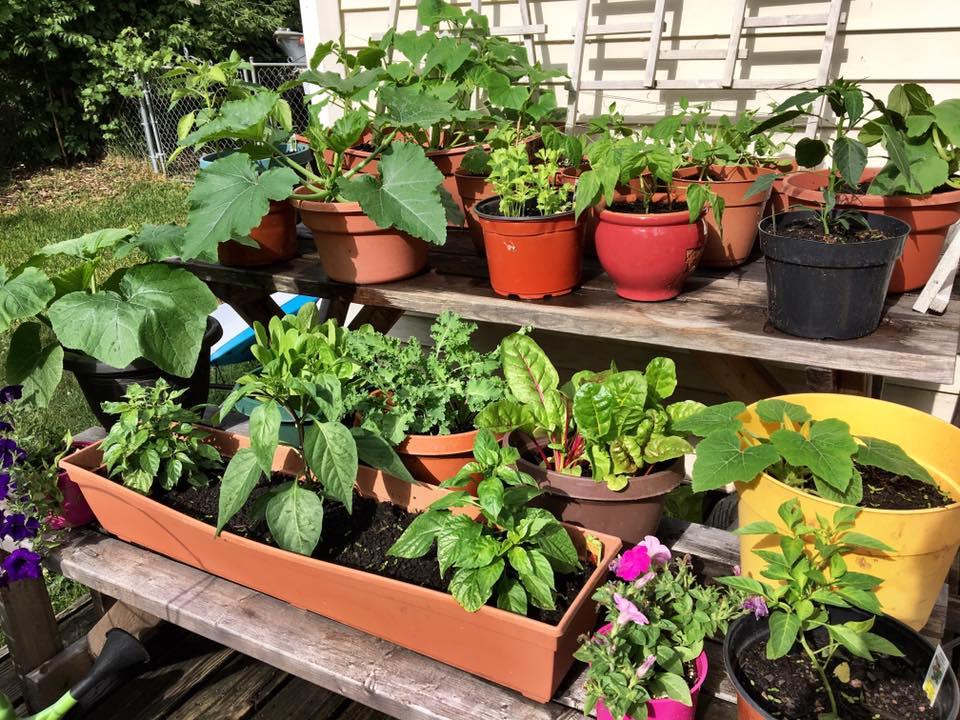 Growing Garden