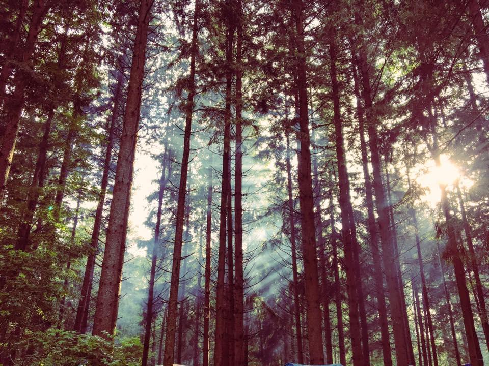 woods fog