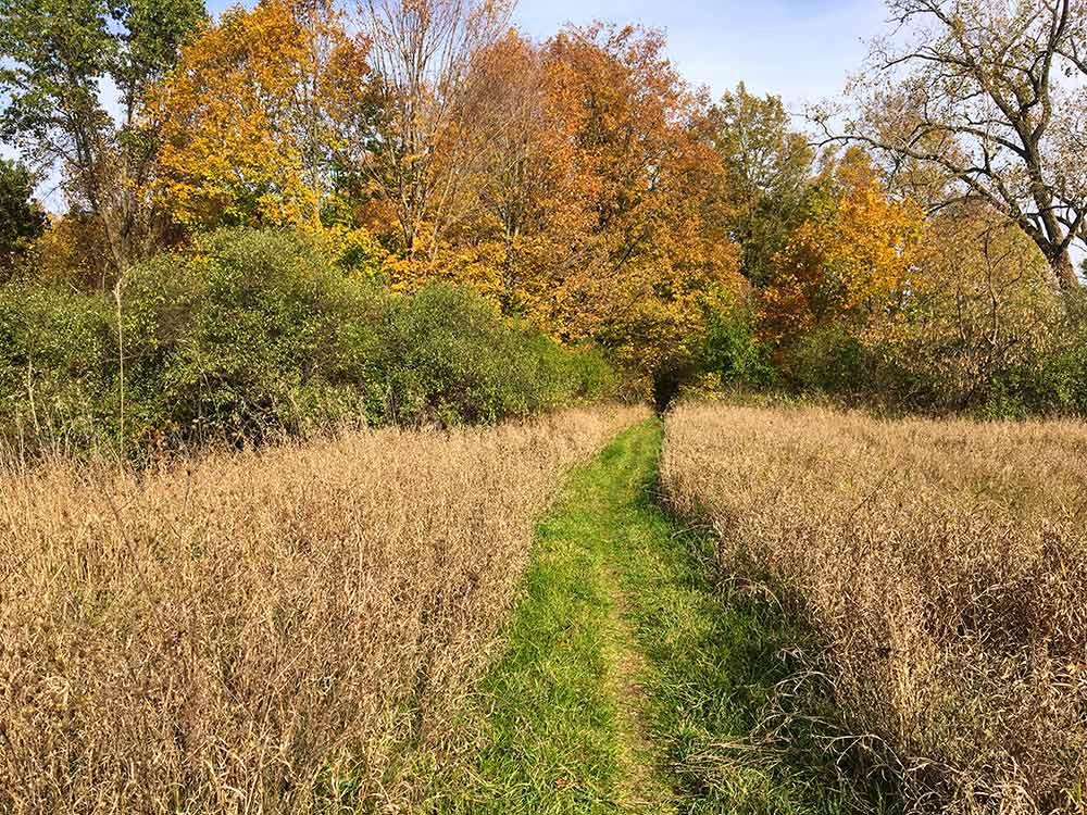 fallcolor-fields-trails