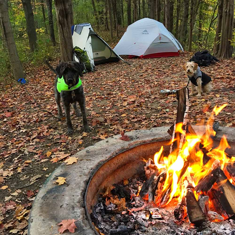 fire-camping-dogs-campsite